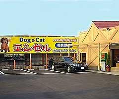ペットショップエンゼル 横浜本店 | Top - お店のミ …